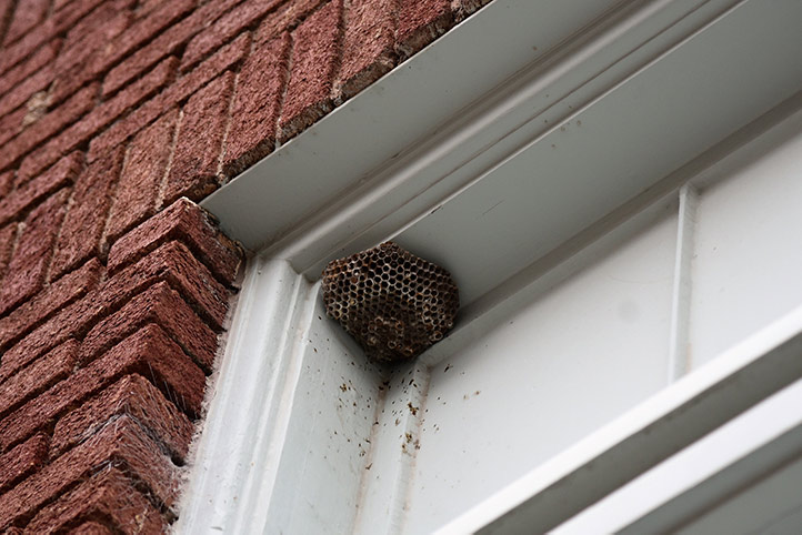 We provide a wasp nest removal service for domestic and commercial properties in Braintree.